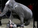 Цирк огромных животных в Липецке 4 Тонны