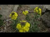 Остров Крым,серия 13 (Судак),24.04.2014.