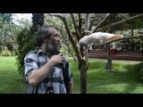 Веселый попугай в парке птиц на Бали